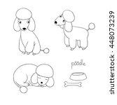 Set Of Cute Poodle Illustratio...