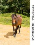 New Forest Pony Hants England...