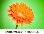 Orange gerbera flower on green gradient background - stock photo
