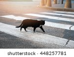 Stock photo homeless black cat crossing the street 448257781