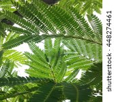 mobile photo lush green leaves... | Shutterstock . vector #448274461