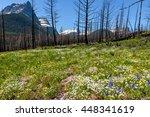 Wildflower Meadow   A...