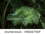 water drops on a big leaf | Shutterstock . vector #448367569