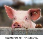 young cute pig overlooking a... | Shutterstock . vector #44838796
