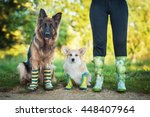 Stock photo two dogs with its owner wearing a rubber boots and are ready for walk in the rain and mud 448407964