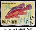 "Small photo of KRIVOY ROG, UKRAINE - JUNE 05, 2016: A stamp printed in Republic of Guinea shows African Hind (Epinephelus taeniops), series ""Fish"", circa 1980"