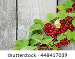 Red Currant. The Branch With...