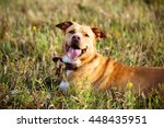 beautiful red dog in leather... | Shutterstock . vector #448435951