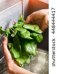 Male Hands Washing Spinach....