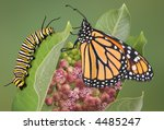 A Monarch Is Sitting With A...