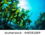 green seaweed  | Shutterstock . vector #448581889