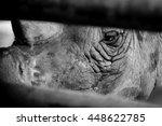 Cry Rhino  Sad Eye Rhino