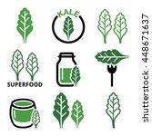 superfood   kale leaves vector... | Shutterstock .eps vector #448671637