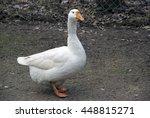 Important Bird Goose. Park