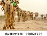Camel Caravan Bringing Goods T...