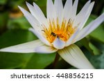 Bees Are Inside White Lotus...