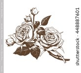 hand sketched bouquet of white... | Shutterstock .eps vector #448887601