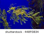 leafy sea dragon photographed... | Shutterstock . vector #44893834