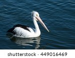 A Pelican Bird Floating On Blu...