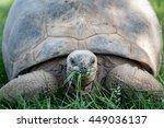 Stock photo tortoise eating 449036137