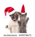 Pug Puppy  In Red Santa Hat...
