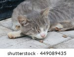 grey and white domestic cat... | Shutterstock . vector #449089435
