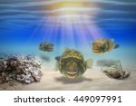 School Of Fish Under Blue Ocea...