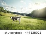 Cattle Farming   Cow Ecologica...