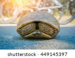 Stock photo turtle hiding in shell in front of cyclers on the road 449145397