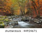 Beautiful Autumn Forest With A...
