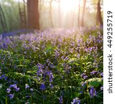 Beautiful Sunrise In Bluebells...