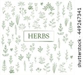 herbs and twigs set. vector... | Shutterstock .eps vector #449267341