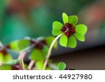 Four   Leaved Clover  Green...