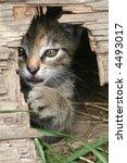 Stock photo playful kitten peeking from the mouse hole 4493017