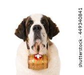 Portrait Of A St. Bernard Dog...