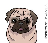 pug dog icon isolated on white ... | Shutterstock .eps vector #449372611