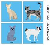 cat breeds  set  vector... | Shutterstock .eps vector #449390851