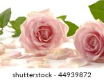 pair of pink rose with petals | Shutterstock . vector #44939872