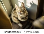 domestic young female cat. home ... | Shutterstock . vector #449416201
