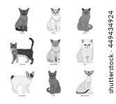 cat breeds  set  vector... | Shutterstock .eps vector #449434924