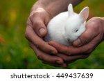 Cute White Bunny Is Sleeping I...