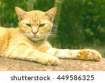 Orange Cats Are Awake