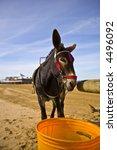 Donkey On Weston Super Mare...