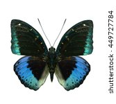 Stock photo male of common archduke lexias pardalis the beautiful velvet blue and green butterfly isolated on 449727784