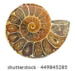 Small photo of Close up of Ammonite fossil