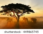 young elephant and man on the... | Shutterstock . vector #449865745