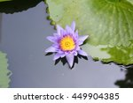lotus lilly purple on water ...   Shutterstock . vector #449904385