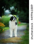 tornjak | Shutterstock . vector #449961889