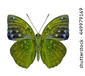 Small photo of Common Archduke (Lexias pardalis) under wings parts, the beautiful pale yellow butterfly in fancy color isolated on white background, jewel of nature