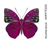 Small photo of Common Archduke (Lexias pardalis) under wings parts, the beautiful pink butterfly in fancy color isolated on white background, jewel of nature